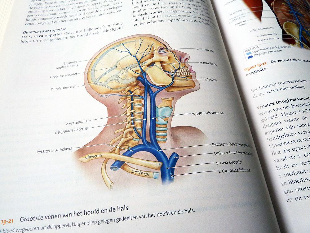 Ausgezeichnet Untere Extremität Venen Anatomie Fotos - Menschliche ...